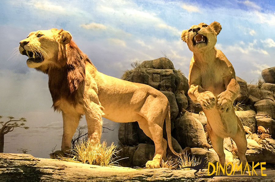 Animatronic lions display in museum