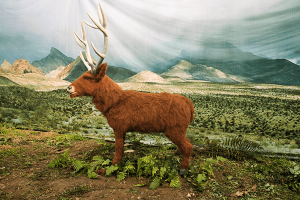 Animatronic Elk