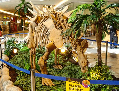 Stegosaurus Skeleton