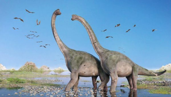 Brachiosaurus waling in lake