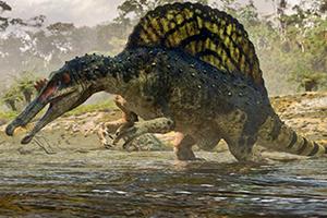 Spinosaurus hunting fish