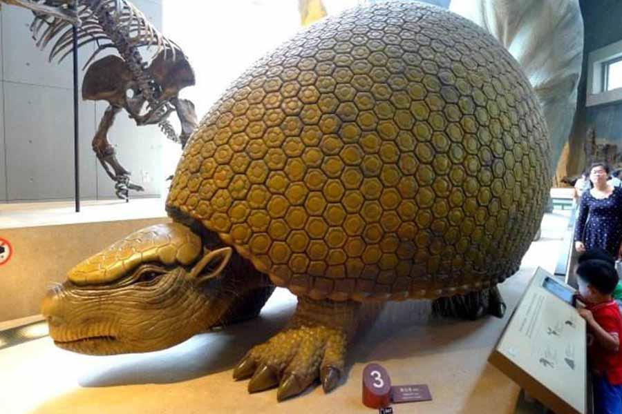 Animatronic Glyptodon