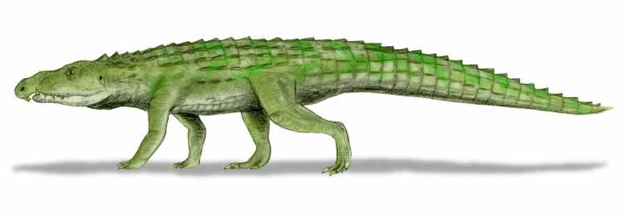 Archosauria