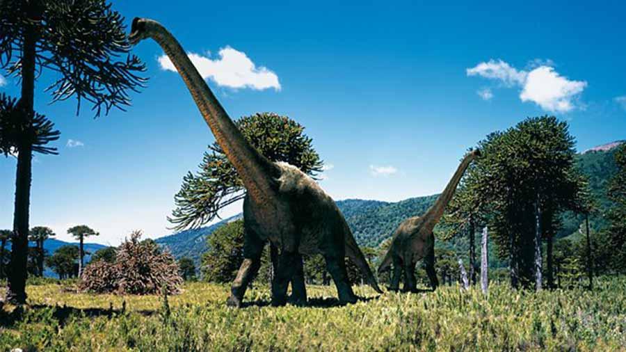 Branchiosaurus