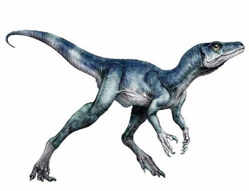 When Was The First Dinosaur Born?