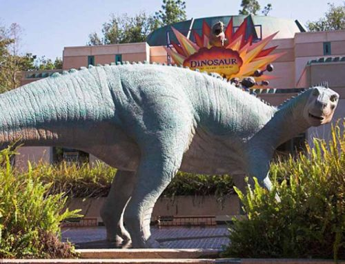 The Opinion To Iguanodon
