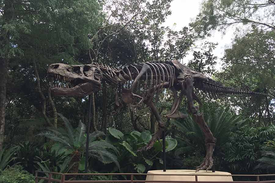 T-rex skeleton displayed in the park