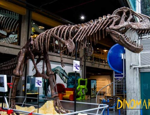 National Museum In South America Highly Praised Our Dinosaur Fossil