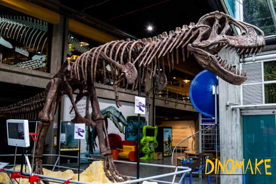 Tyrannosaurus-Rex-fossils