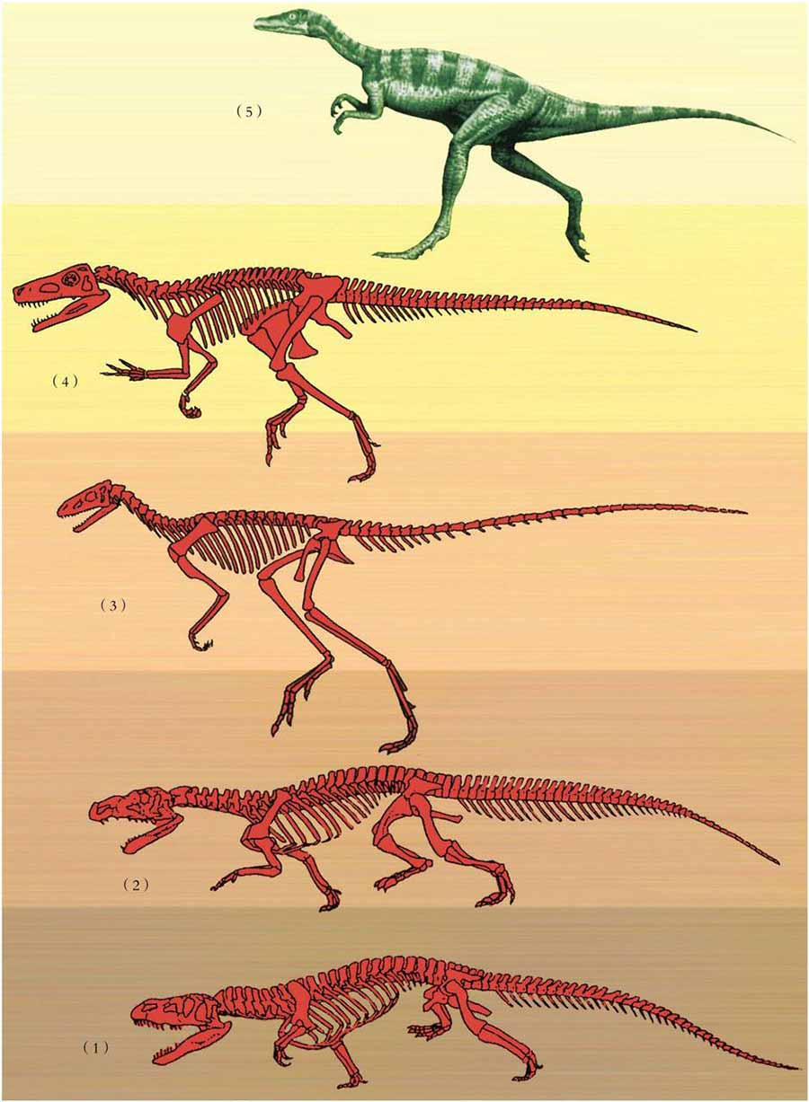 Dinosaur evolution process