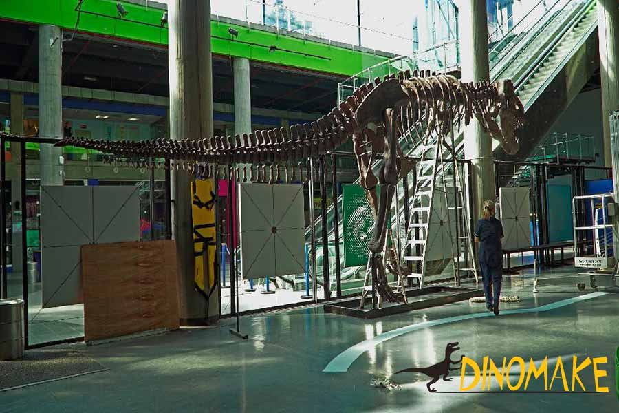 T-rex fossil displayed in the museum
