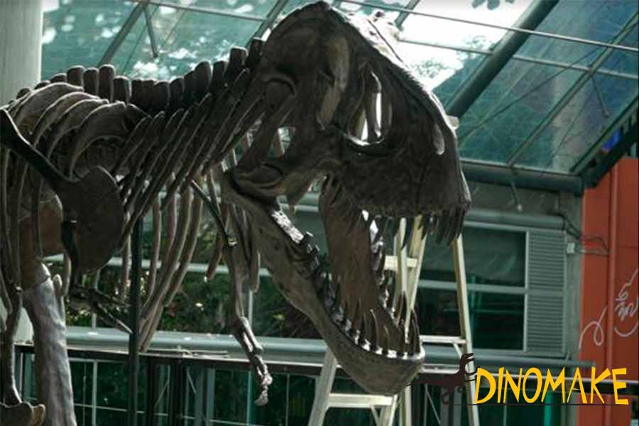 t-rex-skeleton head
