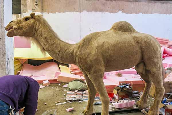 Animatronic Camel