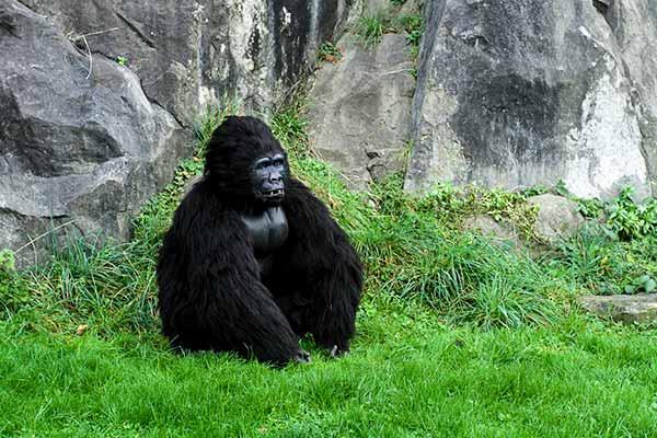 Animatronic Gorilla Costume