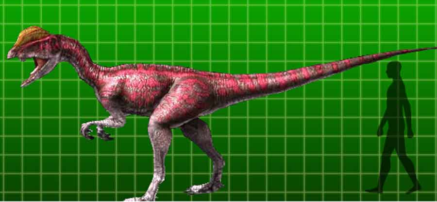 Dilophosaurus size
