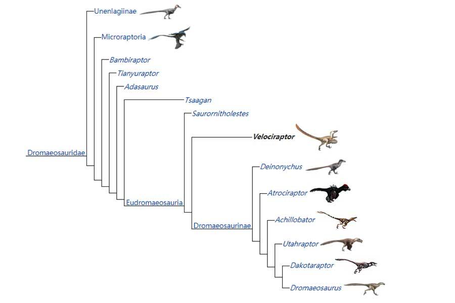 Dromaeosauridae family
