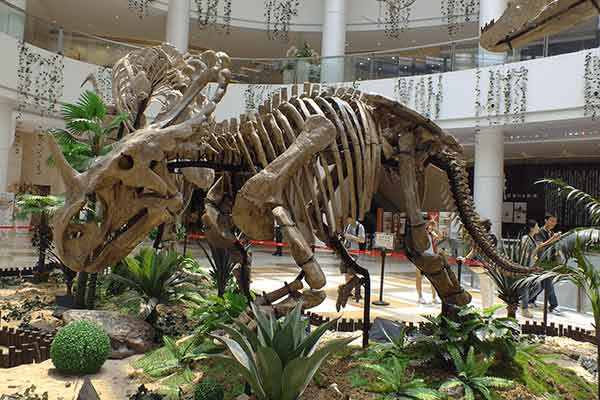 Monoclonius-skeleton-in-shopping-mall