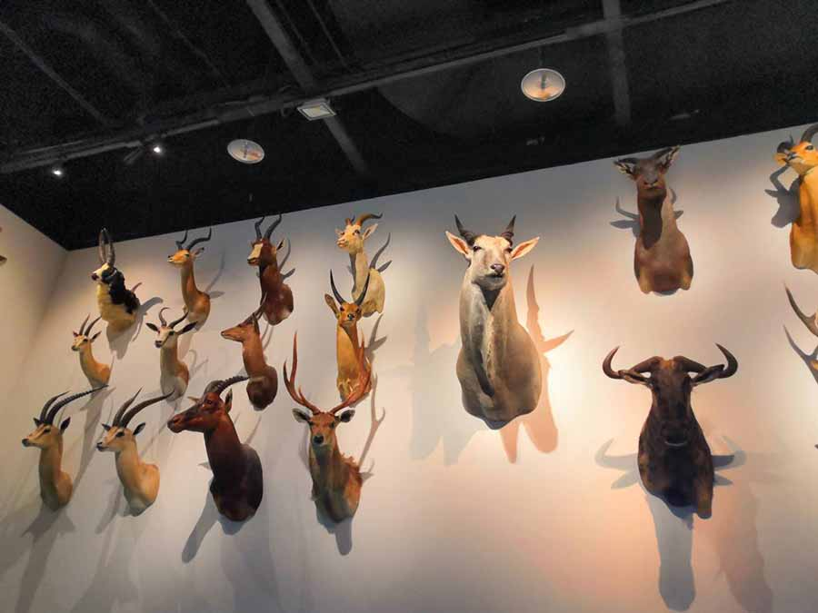 Animal heads mounted on the wall