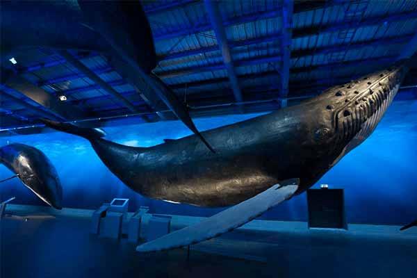 animatronic-whale