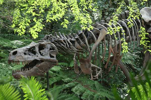 dinosaur-skeleton-for-theme-park