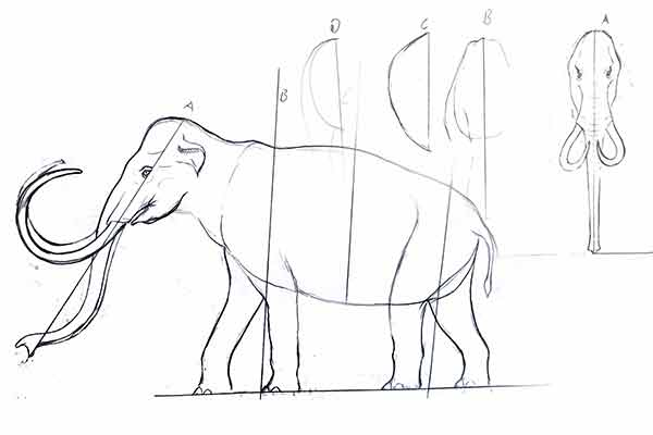 draft-of-animatronic-elephant