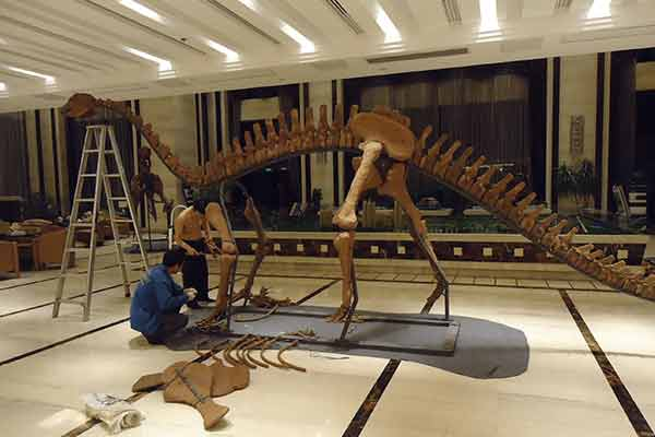 Workers are installing the dinosaur skeleton