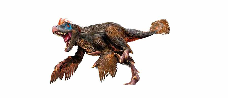 The real Velociraptor might be like this one