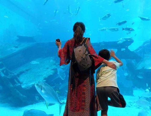 A journey to S.E.A (South East Asia Aquarium)