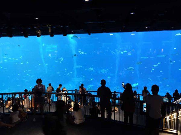 Giant-aquarium
