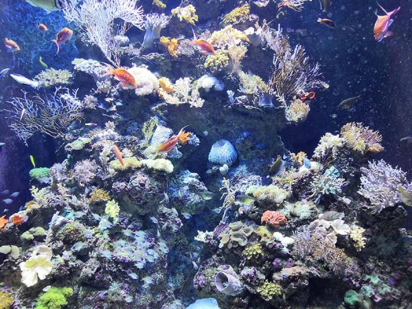 corals-and-coral-reefs2