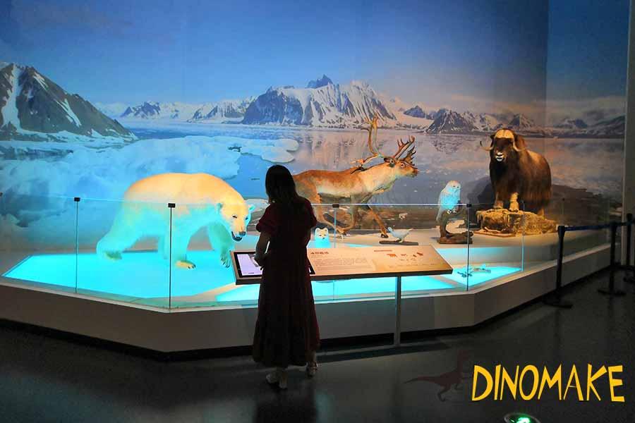 bear model in museum