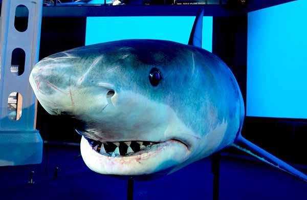 realistic-shark