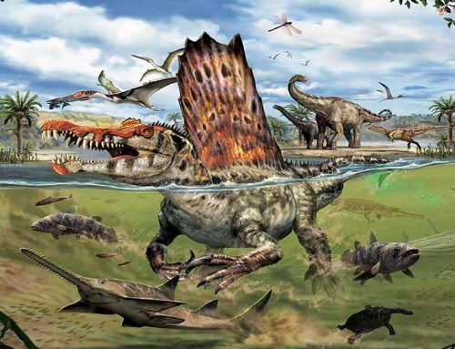 The world's largest carnivorous dinosaur weighs 1.3 times as much as Tyrannosaurus rex.