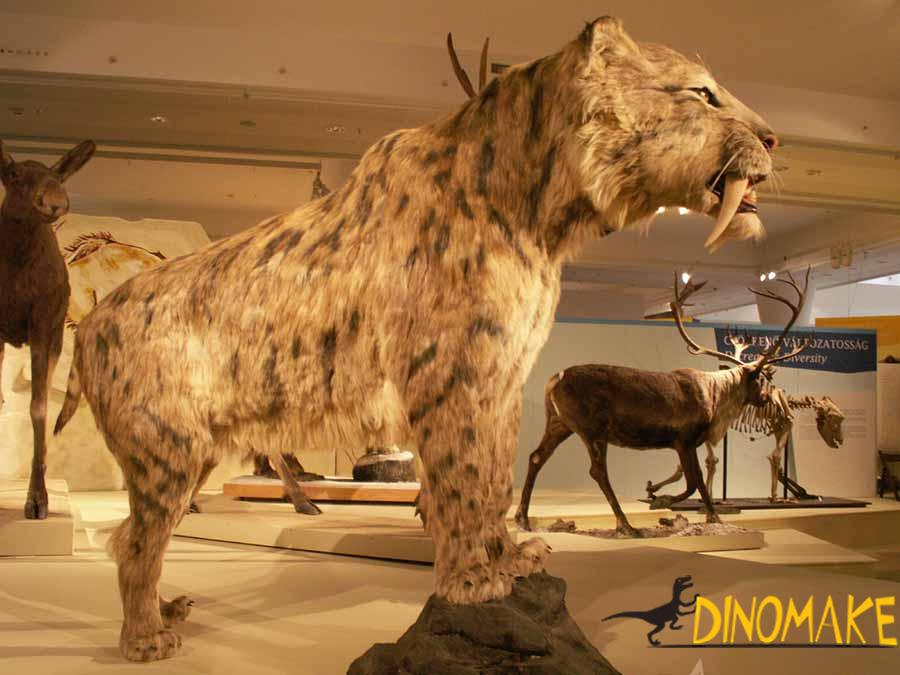 animatronic saber-toothed tiger in the museum