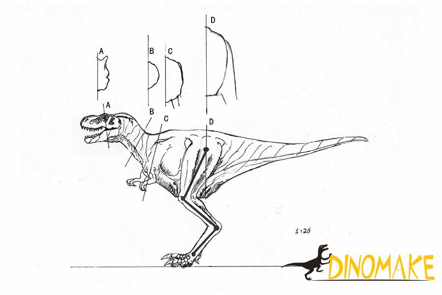 dinosaur costume design