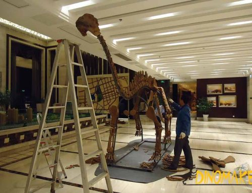 How to make the Realistic Dinosaur Skeleton Model Rented by the Exhibition?