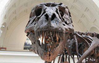 dinosaur skeleton in the museum