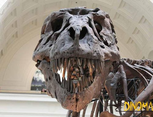 What? The dinosaur skeletons displaying museums are fake?