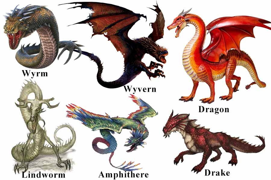 Image result for definitions dragon wyvern drake
