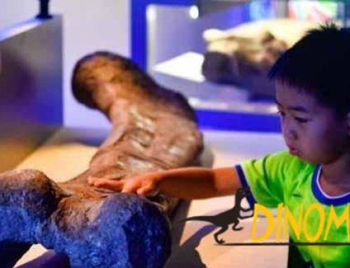 Zigong Dinosaur Exhibition unveiled in Guangdong Provincial Museum
