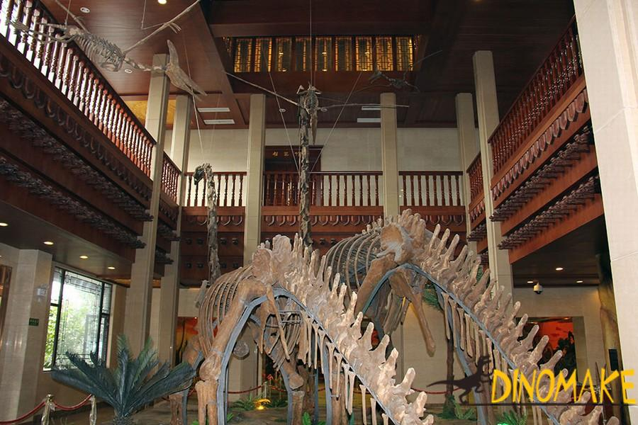 The Best life-size dinosaur skeleton replica