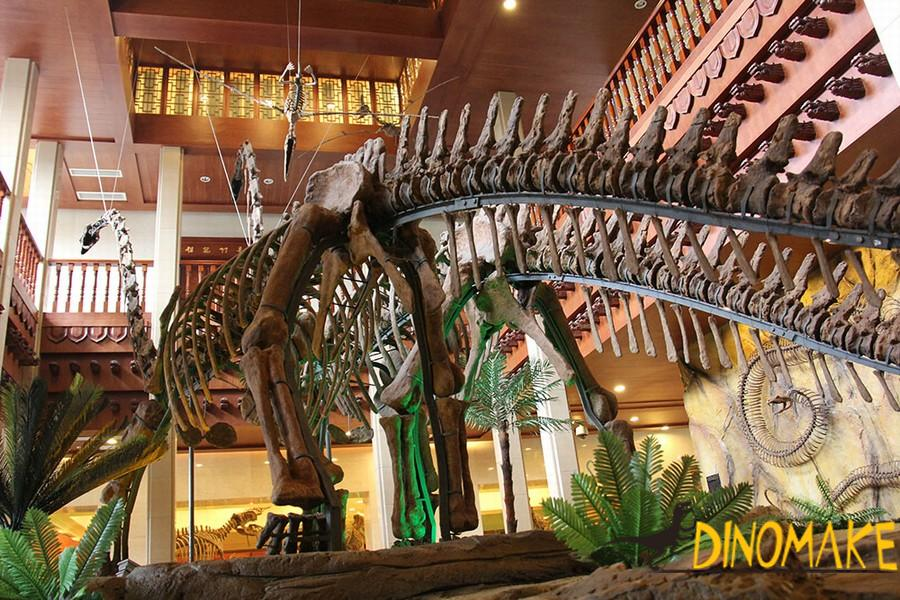 life-size dinosaur skeleton replica