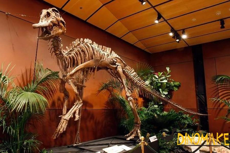 Animatronic Dinosaur skeleton repair work