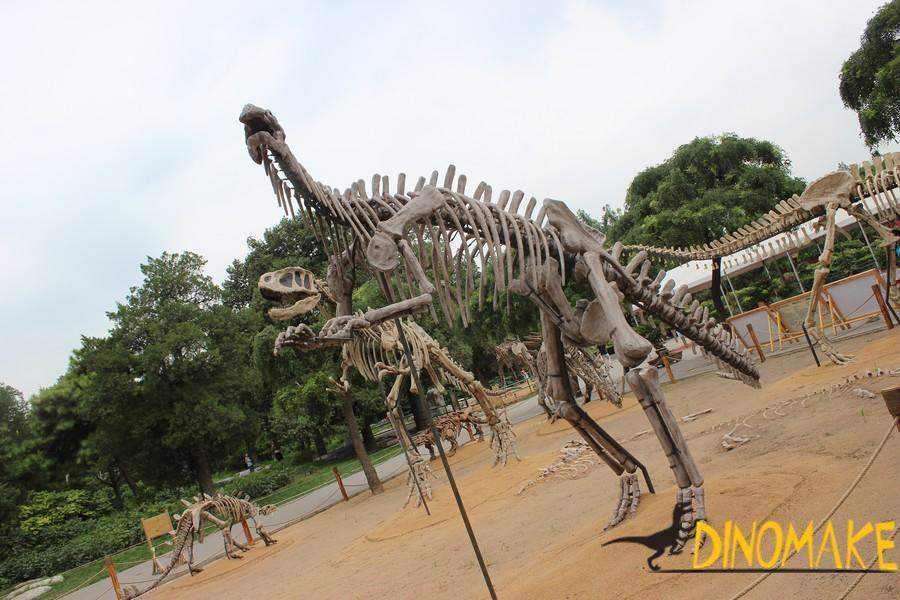 Fossil dinosaurs skeleton
