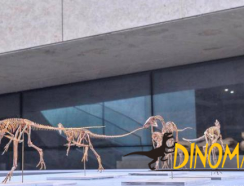 Scientists discover new dinosaur species in Hebei, China for the first time! Only 60 cm in size!