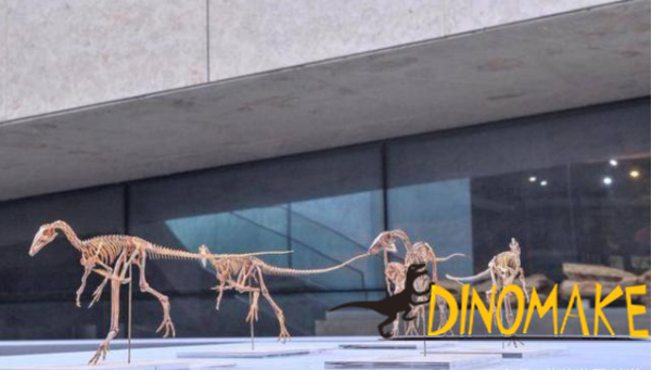 Scientists discover new dinosaur species in Hebei