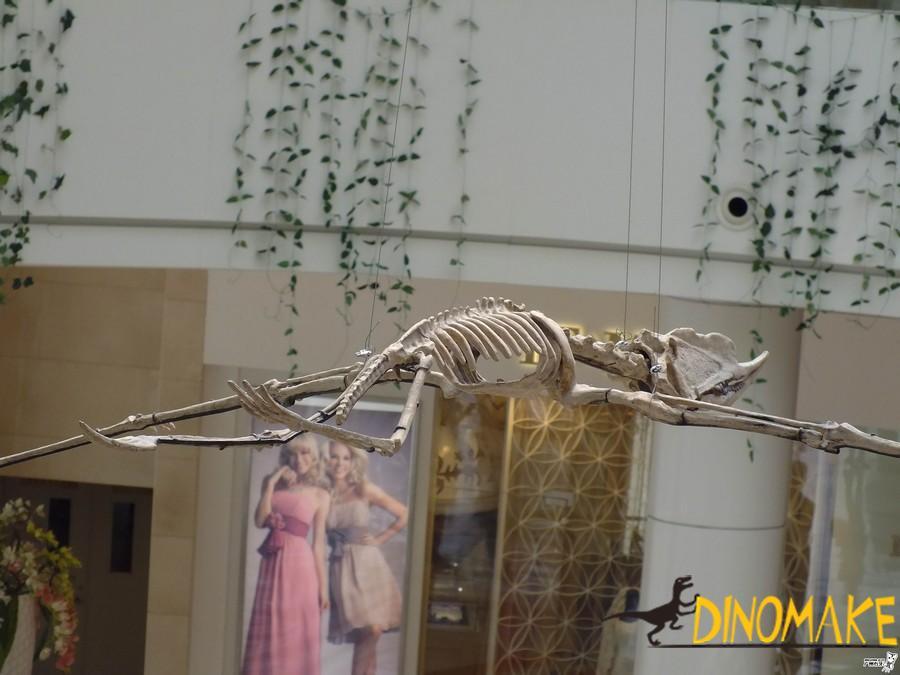 The maintenance method of dinosaurs skeleton