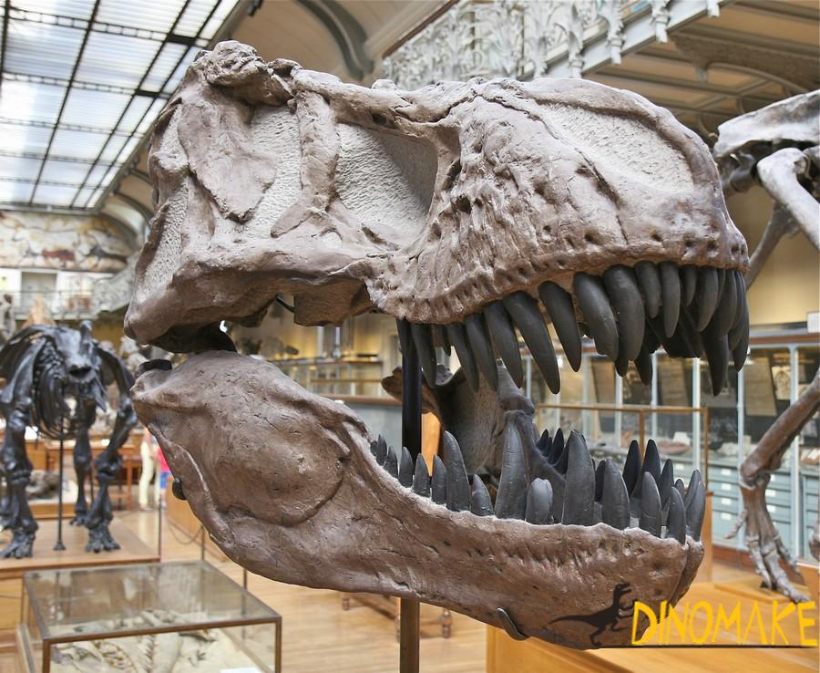 What should animatronic dinosaur skeletons pay attention to