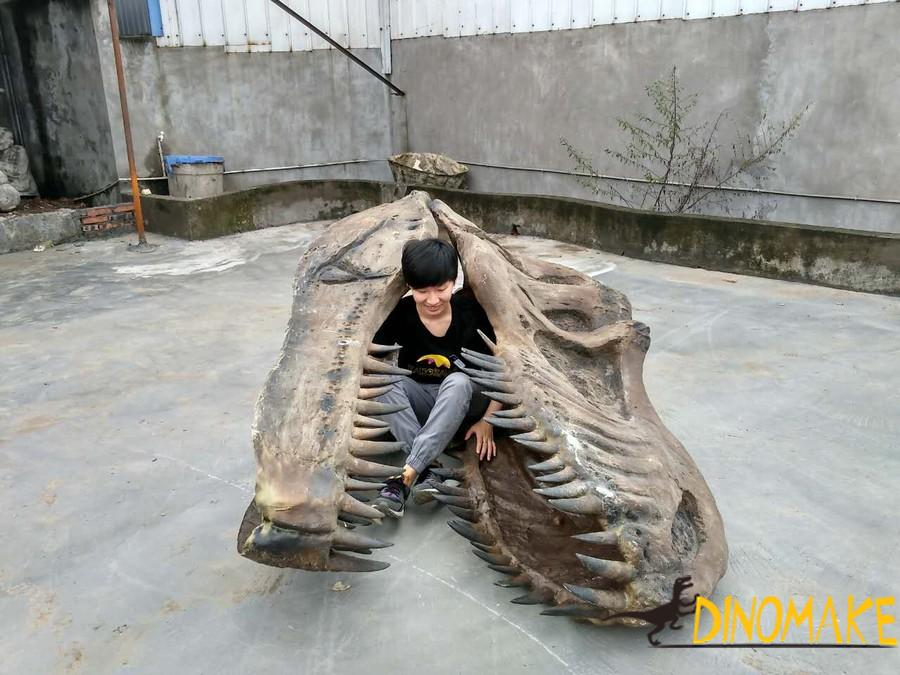What should dinosaur skeletons